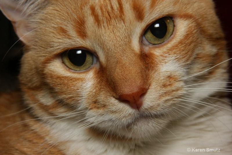 Oliver - ID: 7786458 © Karen N. Smutz