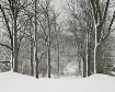 winter-trees-1