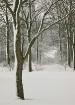 winter-trees-4