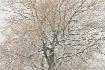 winter-trees-5
