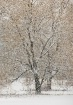 winter-trees-6
