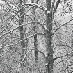 winter-trees-7