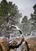 winter-trees-8