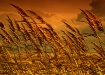 Utah Winds