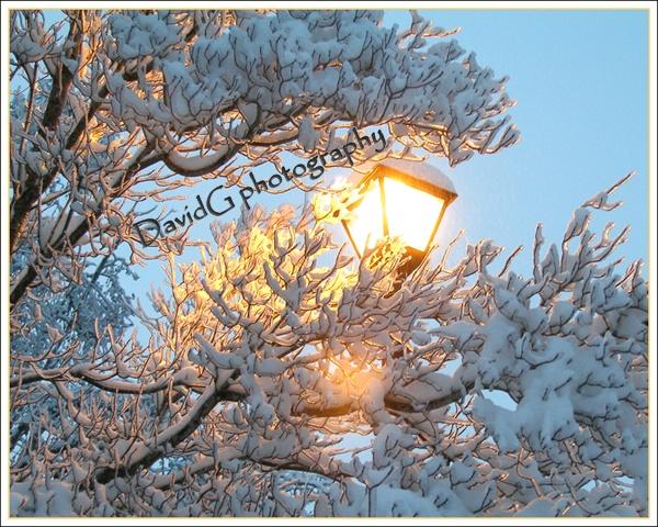Ice Tree and Streetlamp - ID: 7802721 © David P. Gaudin