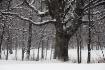 january-trees-2