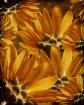 Sunflower Play