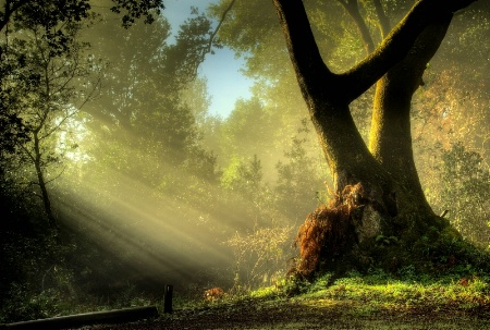 Photography Contest Grand Prize Winner - February 2009: Magical Forest