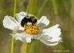 Spring Time Buzz