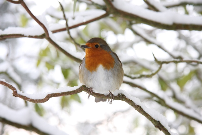 An Obliging Robin