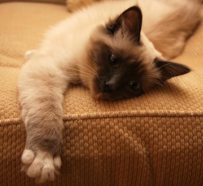 Cumphy Cat #1