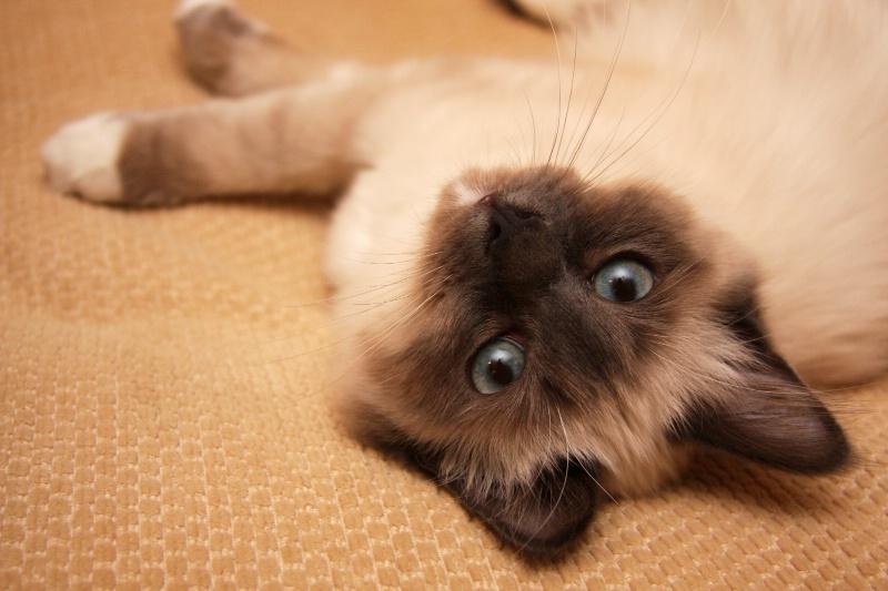 Cumphy Cat #2