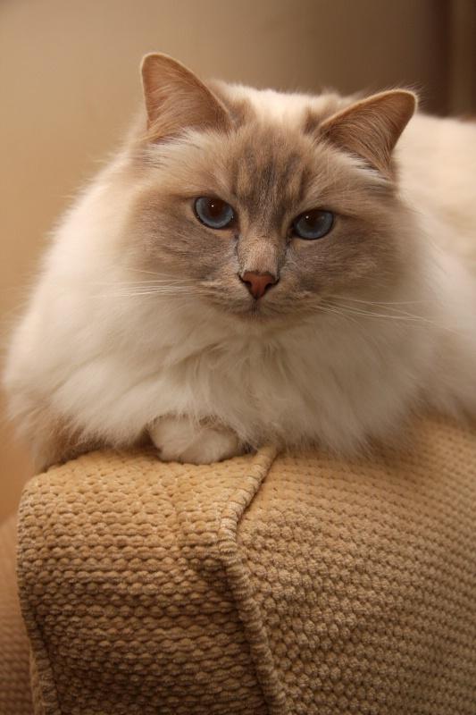 Cumphy Cat #3