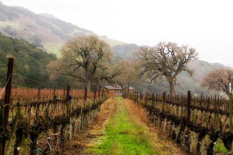 Wine on the Vine - ID: 7890426 © Lynn Andrews