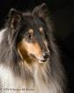 The Next  Lassie?