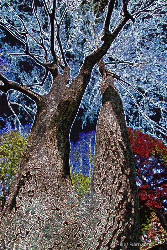 Magic Forest #12 - ID: 7916504 © Elliot S. Barnathan