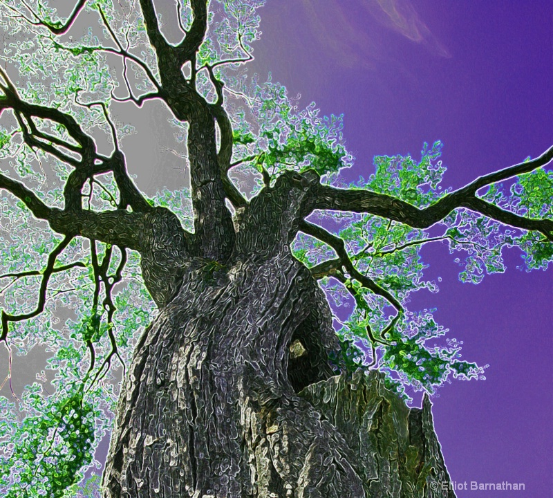 Magic Forest #8 - ID: 7916512 © Elliot S. Barnathan