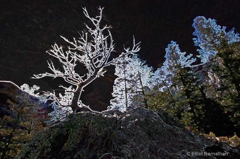 Magic Forest #5 - ID: 7918136 © Elliot S. Barnathan