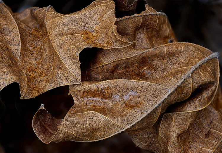 Leafscapes #5
