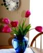 Tulips in my kitc...