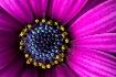 Heart Of A Flower