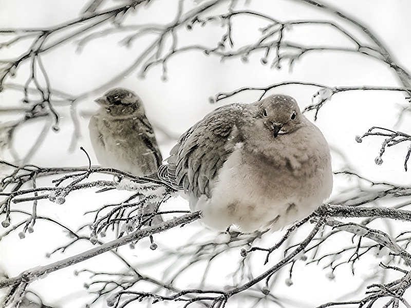 Snow Day - ID: 7953250 © Laurie Daily