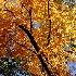 © Dawn Schwack PhotoID# 7955605: Color of Fall