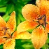 © Carolyn J. Coleman PhotoID # 7957222: Final Flower