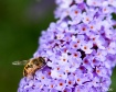 Busy Little Bee.....