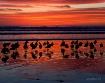 Salmon sunset