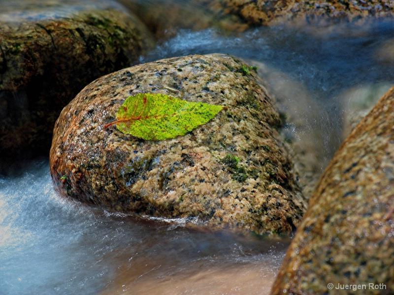 NE-006: Fall Leaf - ID: 7983976 © Juergen Roth