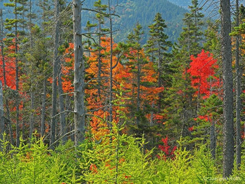 NE-007: Fall Trees - ID: 7983981 © Juergen Roth