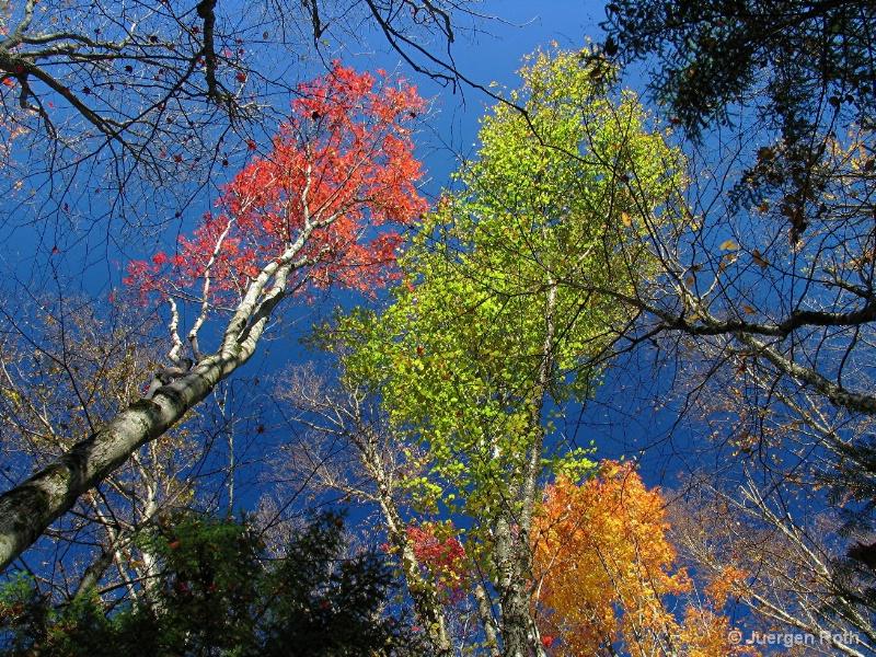 NE-015: Fall Foliage - ID: 7993789 © Juergen Roth