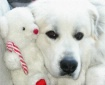 Lil Mo, great pyr...