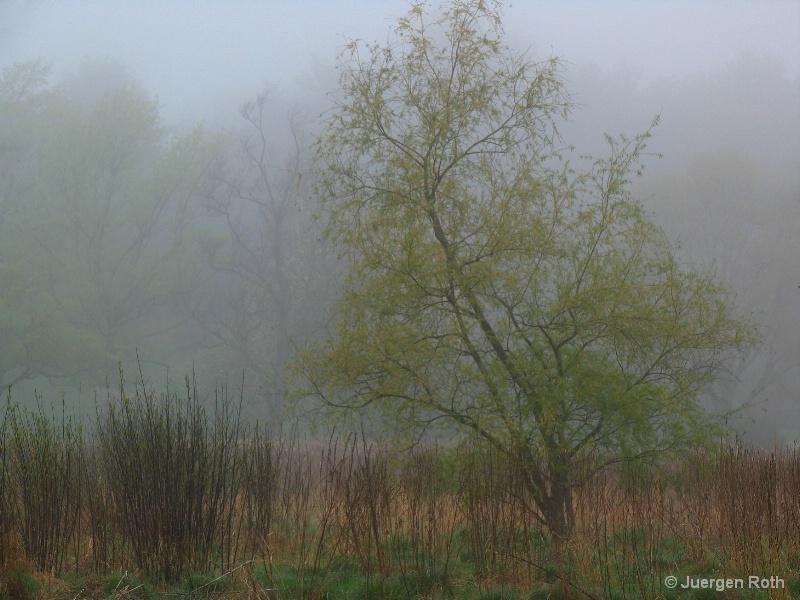 AA-013: Meadow - ID: 8016071 © Juergen Roth