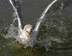 Splash!