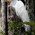 2Great Egret - ID: 8046243 © Steve Abbett