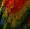 Rainbow Of Feathe...