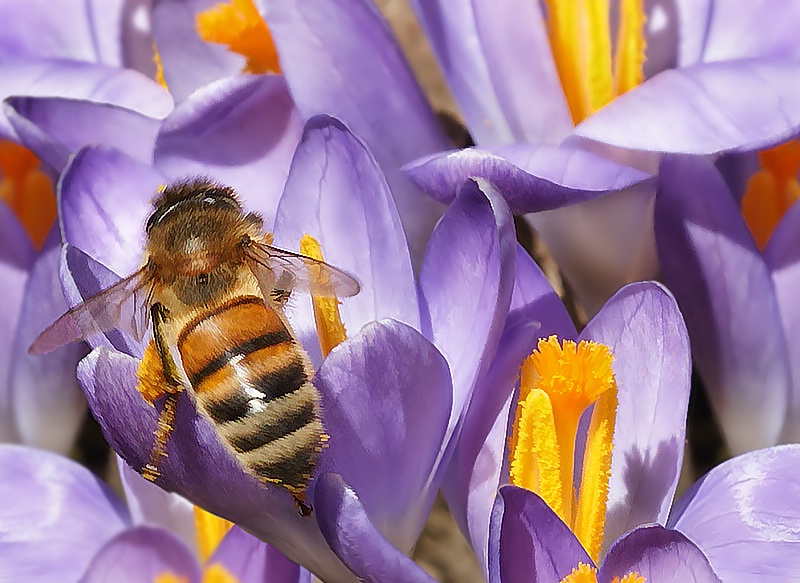 A Little BuZZ in the Garden - ID: 8064815 © Laurie Daily