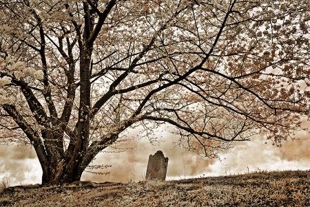 Infrared Cherry Tree Gravestone