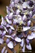 Bee In The Wister...