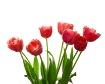 Springtime Blosso...