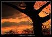 Sunset  silhouett...