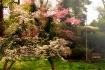Richmond Dogwoods