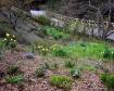 Spring in Central...