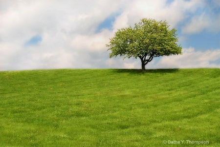 ~ Spring Green ~