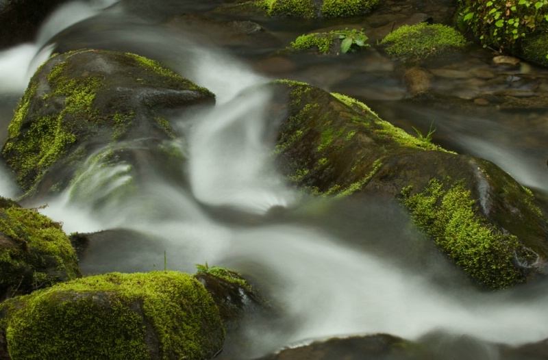 Mossy Run - ID: 8219282 © Karen L. Messick