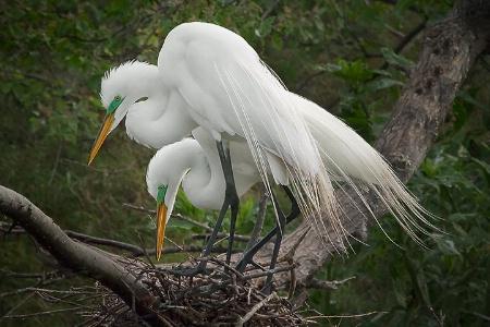 Nesting Pair