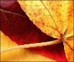 - Autumn Leaves -