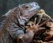 Fascinating Lizar...
